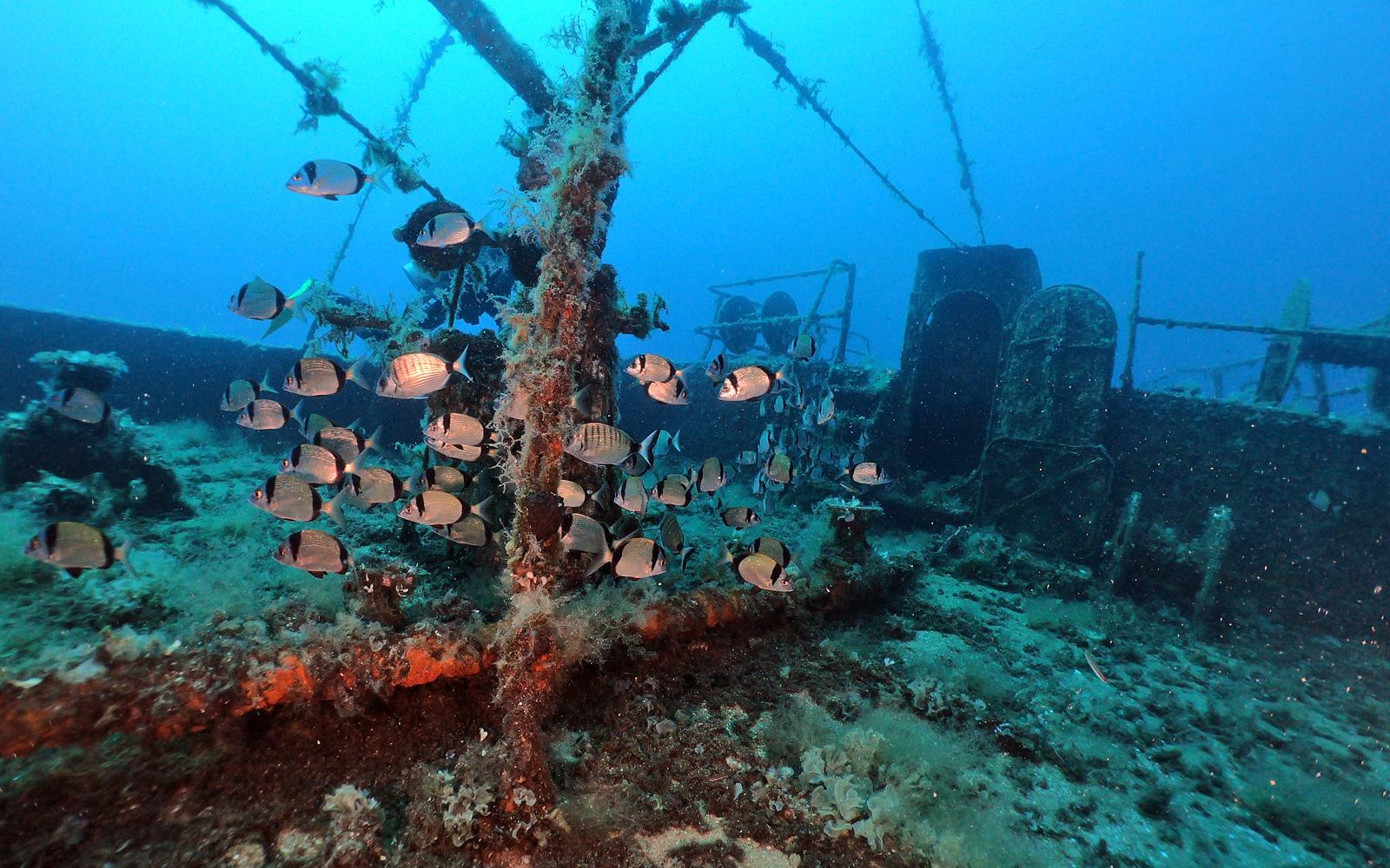 Wreck Dive | Bodrum