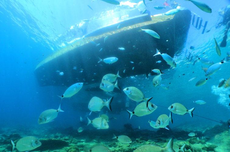 Padi scuba diver course with Aquapro dive center | Bodrum | Bitez