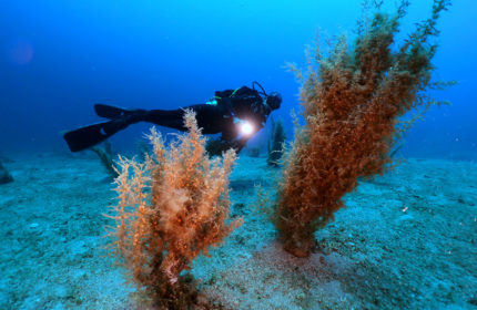 advanced-open-water diving in Bodrum with Aquapro
