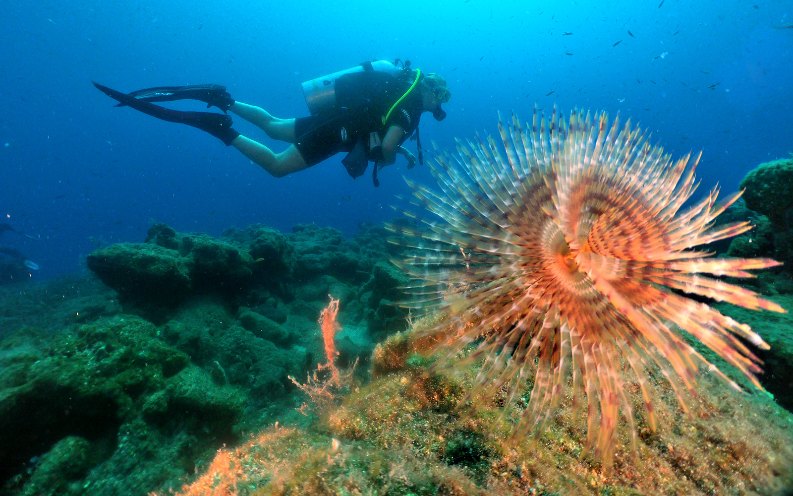 Open Water Dive Course in Bodrum