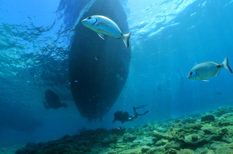 diving in Bodrum with Aquapro